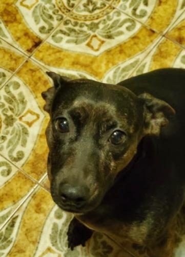 Lost Female Dog last seen 9A and Ashford Ave , Ardsley, NY 10502
