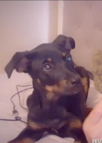 Lost Female Dog last seen Portland/Evergreen, Pueblo, CO 81001