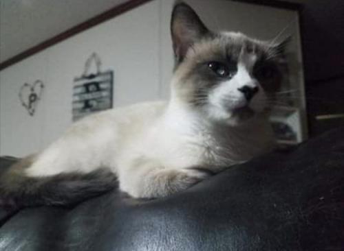 Lost Female Cat last seen Mercer Village, Macon, GA 31201