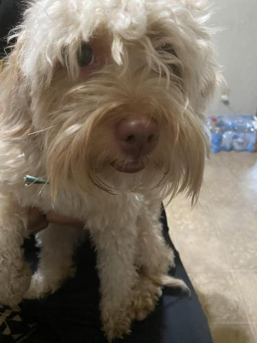 Found/Stray Female Dog last seen Kelley Dr and Hillview, Stockton, CA 95209