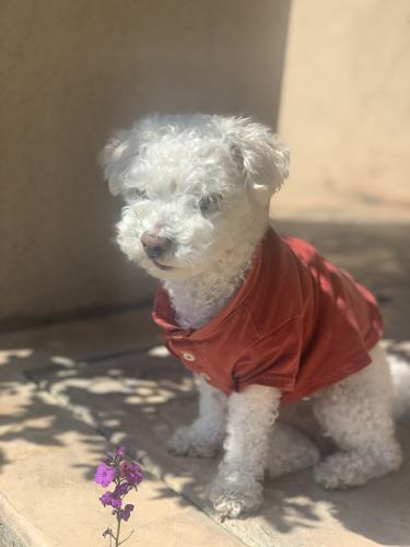 Lost Male Dog last seen 4th st , Union City, CA 94555