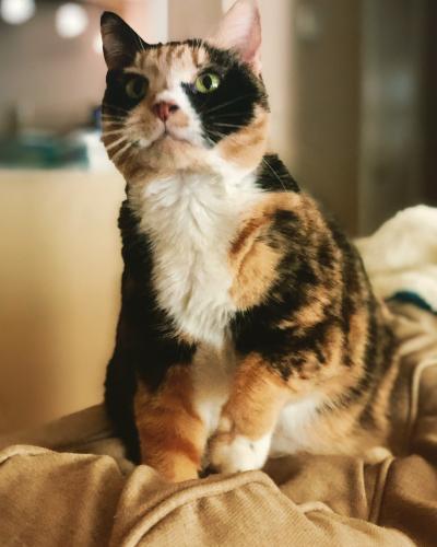 Lost Female Cat last seen Thompson Mill Road, Bonaire, GA 31005
