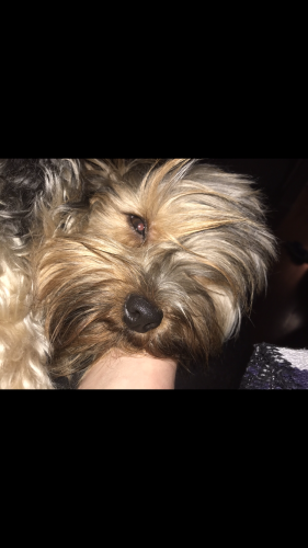 Lost Male Dog last seen Denbigh mobile homes , Newport News, VA 23601