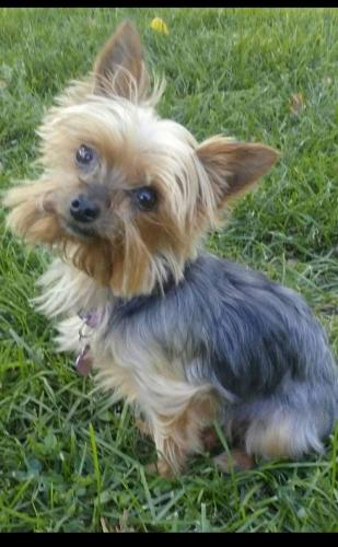 Lost Female Dog last seen West 16th and Elizabeth St. Near parkview hospital, Pueblo, CO 81003