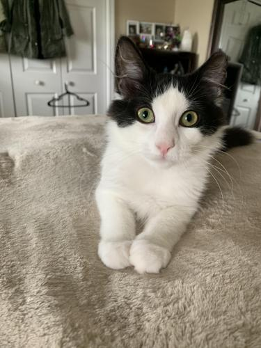 Lost Female Cat last seen Pretty Lake Avenue, Norfolk, VA 23518