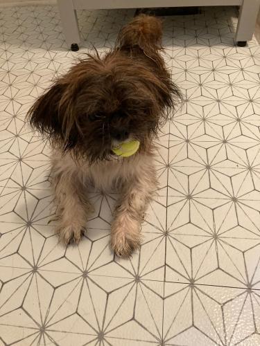 Found/Stray Male Dog last seen Legend Oaks Community , Fearrington, NC 27517