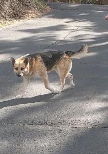 Lost Male Dog last seen Near Berkshire Rd, Newtown, CT 06482