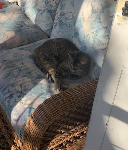 Lost Female Cat last seen Congress and bent , Oshkosh, WI 54901