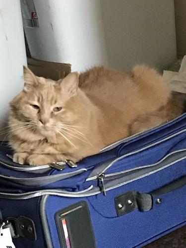 Lost Female Cat last seen College Drive or Duke Way/Duke Court, Pleasant Hill, CA 94523