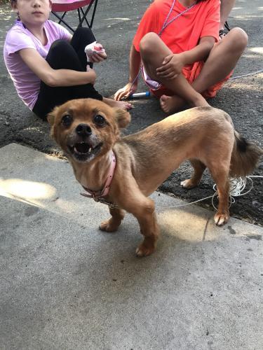 Found/Stray Unknown Dog last seen Wilbur Ave, Antioch, CA 94509