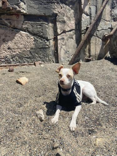 Lost Male Dog last seen She'll gas station, Fairfield, CA 94533