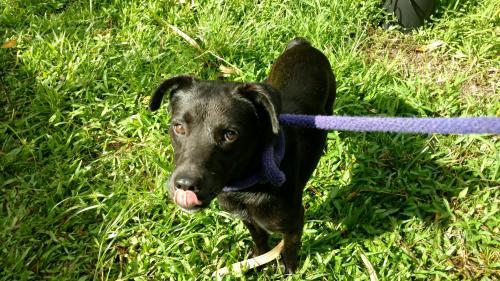 Found/Stray Unknown Dog last seen Hawaiian Acres Entrance at Kuauli Rd & Old Volcano Trail, Hawaiian Acres, HI 96760