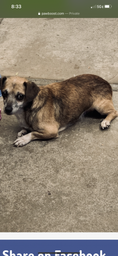 Lost Male Dog last seen Tennyson, Hayward, CA 94545