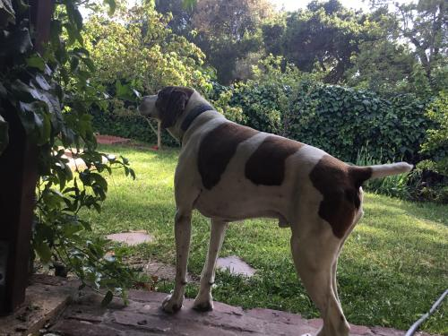 Lost Male Dog last seen Around Japanese Garden & San Leandro Creek , Hayward, CA 94546
