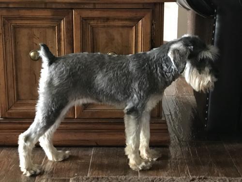 Found/Stray Male Dog last seen W. 15th between Santa Fe & Kelly Edmond , Edmond, OK 73013