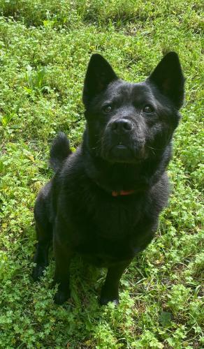 Lost Female Dog last seen old benton rd, Monroe County, GA 31046