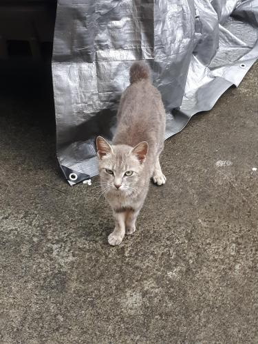 Found/Stray Unknown Cat last seen Outside my house/ woods by my house, Seymour, TN 37865