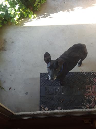 Found/Stray Male Dog last seen Pollydale and Kellis, San Antonio, TX 78223