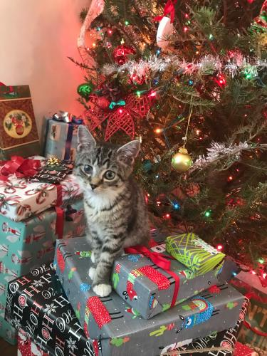 Lost Female Cat last seen Hardee's off Campostella , Norfolk, VA 23523