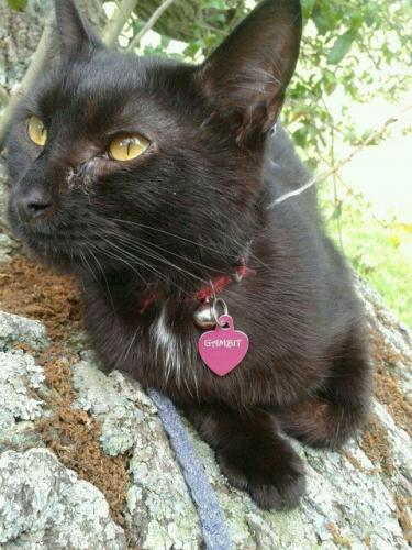 Lost Female Cat last seen Hethersett and peddars way, Norfolk, VA 23505