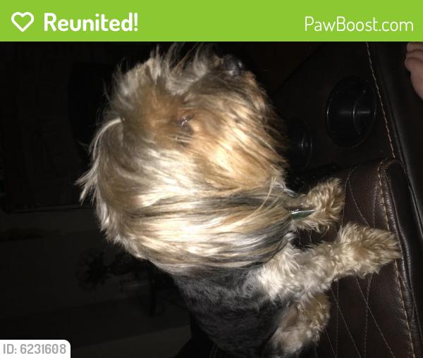 Reunited Male Dog last seen Denbigh mobile homes , Newport News, VA 23601
