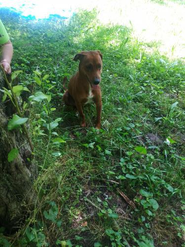 Found/Stray Female Dog last seen Kimberlin heights rd, Seymour, TN 37865