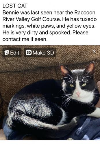 Lost Male Cat last seen Adel, Iowa River Valley Golf Course , Adel, IA 50003
