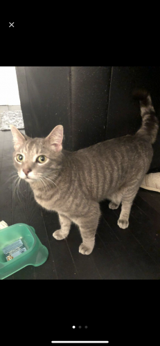 Found/Stray Unknown Cat last seen Centennial and Gorman St, Raleigh, NC 27606