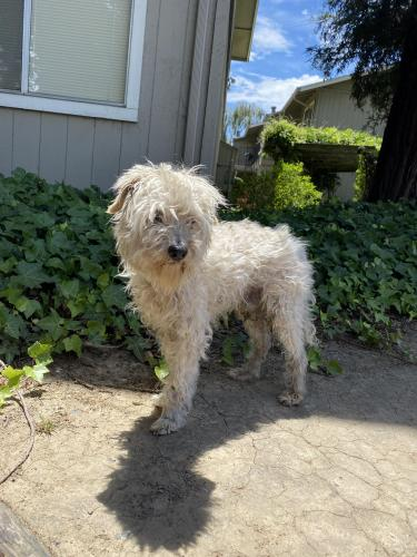 Found/Stray Male Dog last seen Dover Ave & E Tabor Ave, Fairfield, CA 94533