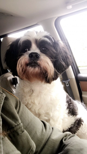 Lost Male Dog last seen Super Wal Mart, Sevierville, TN 37862