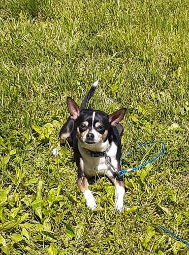 Lost Male Dog last seen Dogwood dr and whitower, Knoxville, TN 37919