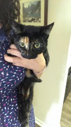 Lost Female Cat last seen Claystone Park, Macon, GA 31220