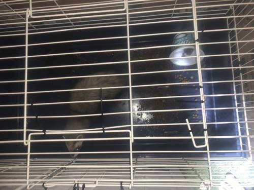 Found/Stray Unknown Ferret last seen Near Davie Blvd Fort Lauderdale Fl 33312, Fort Lauderdale, FL 33312