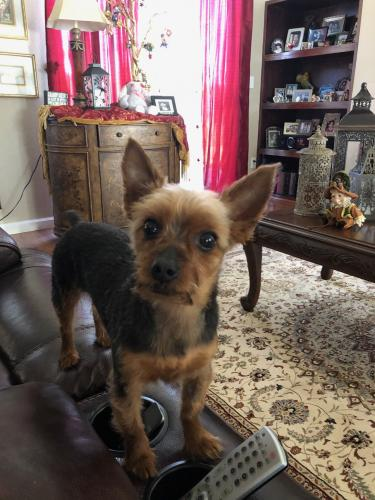 Lost Male Dog last seen South 41st ave and West lydia ln, Phoenix, AZ 85041