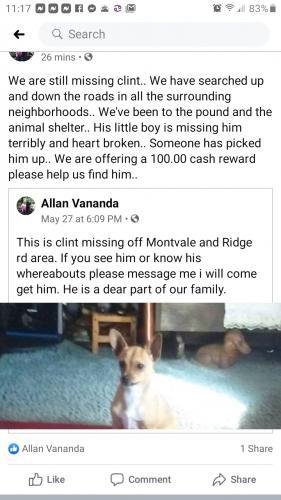 Lost Male Dog last seen Marathon station montvale rd, Maryville, TN 37803