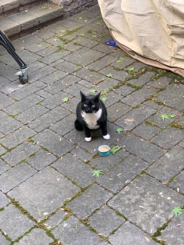 Found/Stray Male Cat last seen Kensington Terrace, Maplewood, NJ, Maplewood, NJ 07040