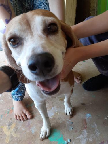 Found/Stray Female Dog last seen Hener and Mcarthur , Oklahoma City, OK 73162