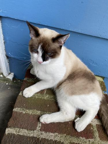 Found/Stray Unknown Cat last seen Cross St. & Tuckahoe Rd, Yonkers, NY 10708