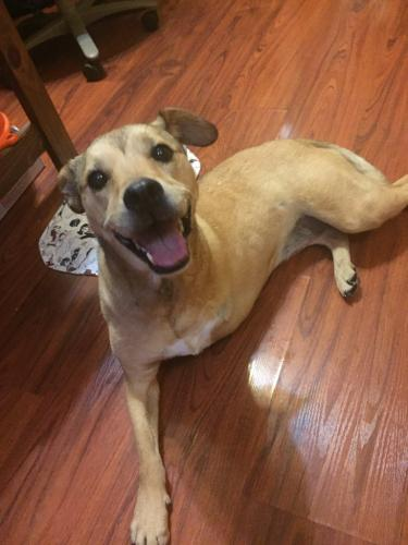 Found/Stray Female Dog last seen 132nd & Lake Youngs, King County, WA 98035