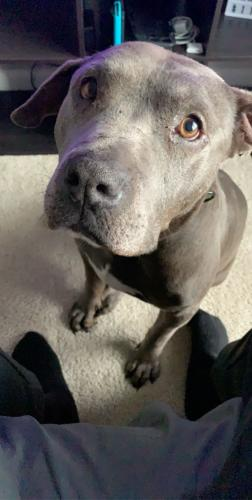 Lost Male Dog last seen Double tree, Virginia Beach, VA 23451