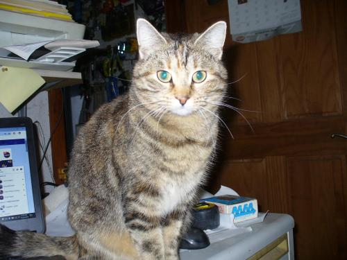 Lost Female Cat last seen Packerland & Grant Street (EE), Possibly Packerland and Waube Ln., De Pere, WI 54115