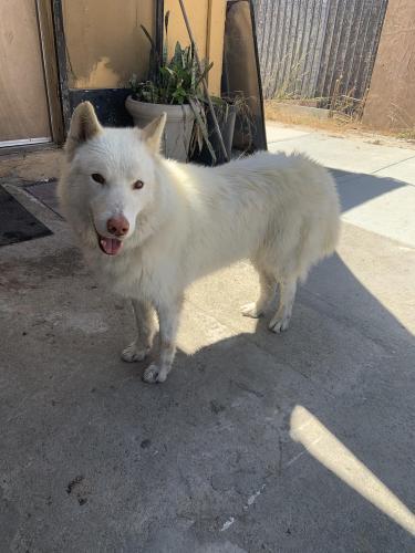 Found/Stray Male Dog last seen Taco shop albertos, San Diego, CA 92113