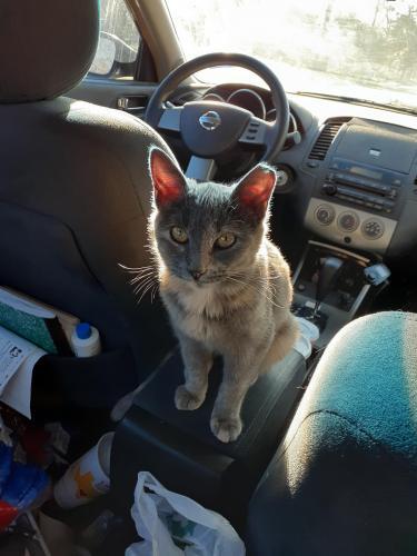 Lost Female Cat last seen Thousand oaks and starlight terrace , San Antonio, TX 78233