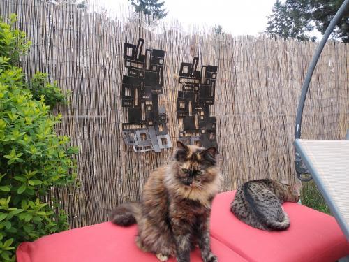 Lost Female Cat last seen Garrison Ave/ Guthrie Rd , Port Orchard, WA 98366