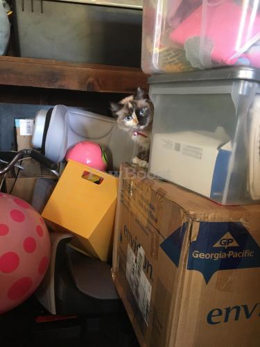 Found/Stray Unknown Cat last seen In garage , Tustin, CA 92780