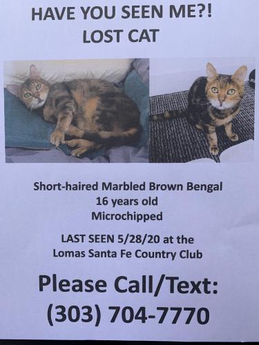 Lost Female Cat last seen Lomas Santa Fe & Highland Drive, Solana Beach, CA 92075