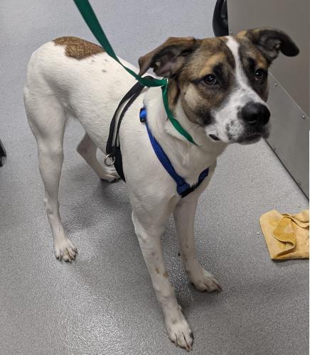Found/Stray Male Dog last seen finch st, El Cajon, CA 92020