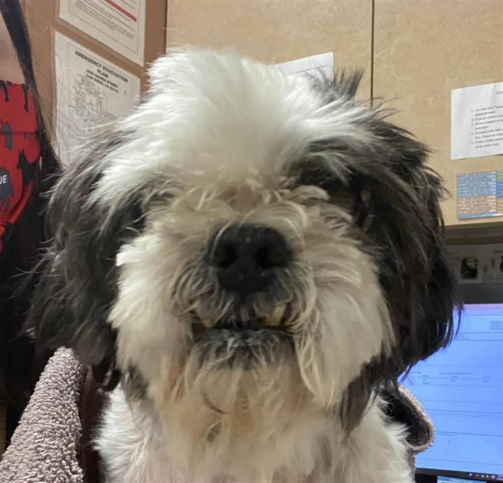 Shelter Stray Male Dog last seen , San Diego, CA 92126