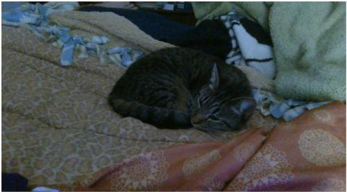 Lost Female Cat last seen El Cajon, El Cajon, CA 92020
