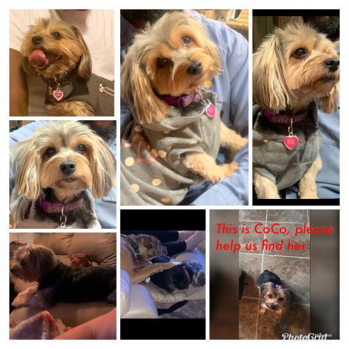 Lost Female Dog last seen Kallison Arbor 78254, San Antonio, TX 78254